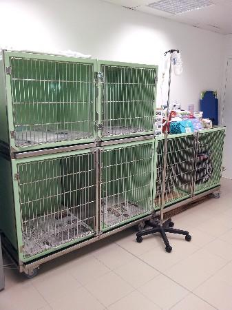 Chenil, salle de soins et hospitalisation